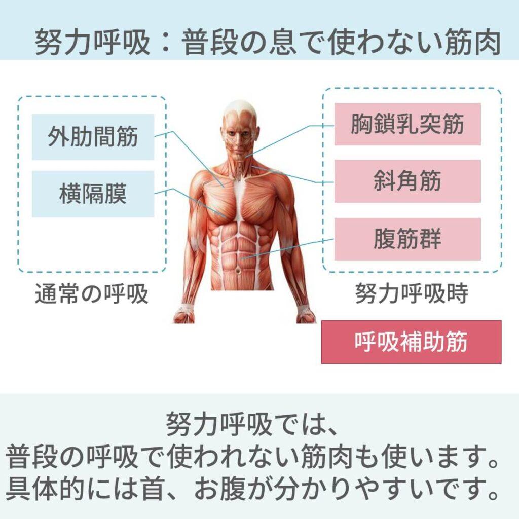 肺炎 治療 診断 症状 血液検査 レントゲン CT 治療 抗菌薬 予防 入院 A-DROP 看護計画